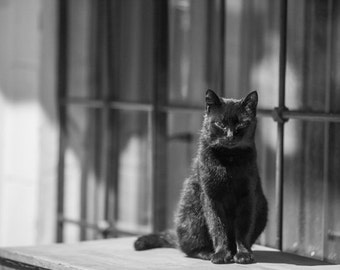 Stray CAT BLACK and WHITE Istanbul photo, street photography, nocturnal Istanbul, night photography, instant download