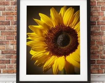 Sunflower Photograph print, colour photography, yellow sunflower print, original colour print, Large sunflower, home decor