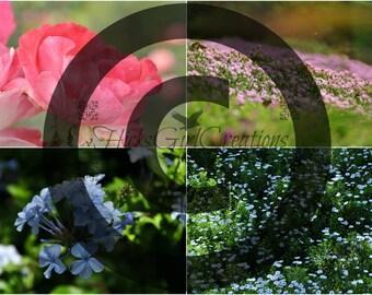 Flower Spring Photography Digital File (4 images)
