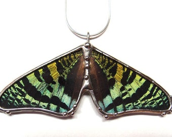Green and Black Sunset Moth Necklace - Real Butterfly Necklace - Great Valentine's Day Present for Her - Gift for the Nature Lover