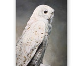 SALE! Snowy Owl Greeting Card - Bird - Greeting - Blank - Stationery - Gift
