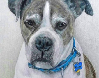 Hand-Drawn, Custom Pet Portrait, 11 x 14 Colored Pencil Art, cat dog horse memorial, best etsy shop, top etsy seller