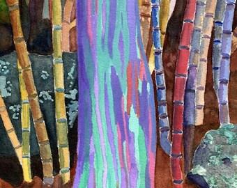 Rainbow Eucalyptus Etsy De