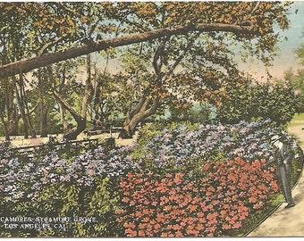 Vintage 1920's -1950's  Linen Postcard Sycamore Grove, Los Angeles, CA
