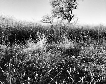 Near Sunset - 8 x 8 inch Instagram Photo - Black and White Landscape