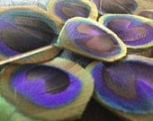 TEN beautiful trimmed Peacock eye feathers Crafting supplies feathers, cruelty free collection ty5