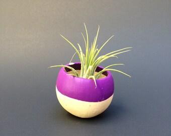 Air Plant Pod - purple top