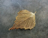 Real Leaf Brooch/Pin and Pendant - 24k Gold - Birch