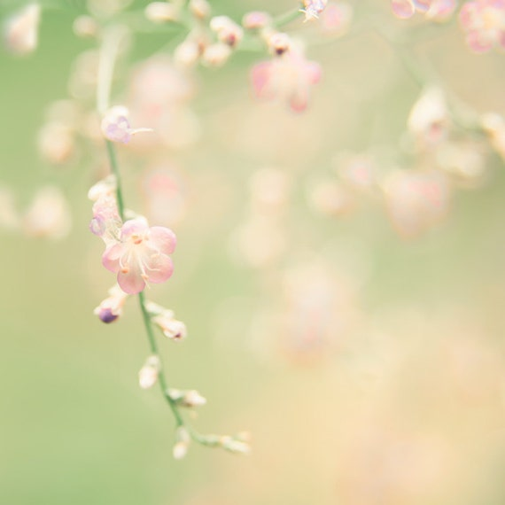 Nature photography, pink flower, fresh mint green, peach, pink, summertime, honeysuckle pink, cottage, pastel, neutral, shabby chic wall art