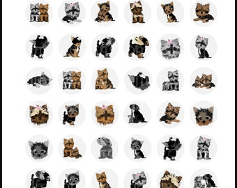 Yorkies Doggies set 1 - 4 digital bottlecap 8.5in x 11in collage sheets {Instant Download}