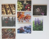 set of 8 notecards - homestead farm photography