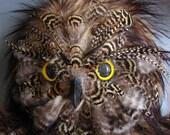 OwlBear Cub Art Doll - Handmade OOAK Plush