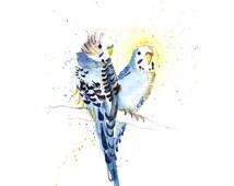 A4 Australian Budgie Love Art Print Bird Watercolour Illustration Gilcee Art Print