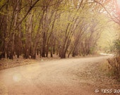 Timber Road Photography Print - Fall Timber Photography -  Woodland Photography - Landscape