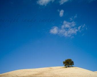 Spanish Tree Fine Art Photography