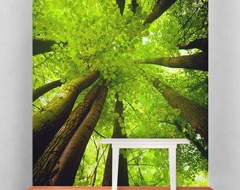 Tall Trees Self Adhesive Wallpaper