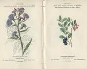 Alpine Azalea, Heath, Arnica, Lettuce, Whortlebury, 1898, French Botanical Book Plate, 83-96, 84-95, Henry Correvon, Country Cottage Decor