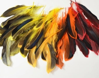 Mallard Feathers, Iridescent Green Wing - Fire Mix (40pcs) : MMIX002 #1 #4 #5 #6