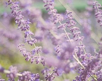 Purple flower photography,  Soft lavender, summer flower photography  home decor