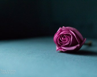 Pink Rose on Teal Velvet (photos, various sizes)