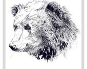 Bear  - A4 print