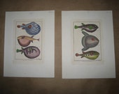 beautiful pair of vintage hand colored French engravings of fish
