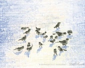 Birds in Snow Square, Prints of Pastel