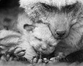 BABY FOX SNUGGLE Photo, B...