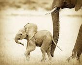30% OFF SALE, Set of 4, 8 X 10 Sepia Animal Prints, Safari Animal Nursery, Elephant, Lion, Cheetah, Giraffe, Baby Animal Nursery Art Print