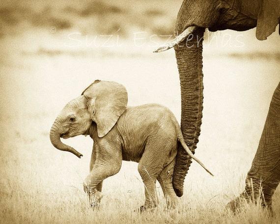 Vintage SAFARI BABY ANIMALS, Set of 4 Sepia Photos, Elephant, Lion, Cheetah, Giraffe, African Wildlife Photography, Safari Baby Nursery Art