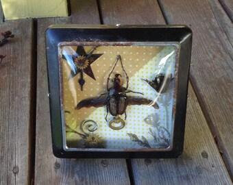 """Real Insect Art - """"Here comes the sun"""" - Cetoniidae: Hegemus vitattus"""