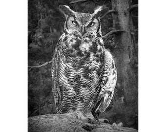 Great Horned Owl in West Michigan No.1844BW A Fine Art Black and White Bird Nature Photograph
