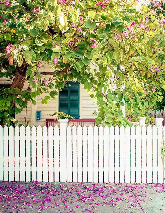 Art, Photography, Key West Photography, Wall Art, Print, Travel Photo, Blossoms, Pastels