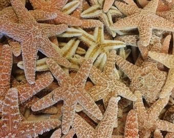 "Real Natural Sugar Starfish Large (7-8"") FREE Shipping Decor Arts & Crafts Frame Accents DIY Wedding Decorating Sea Stars Tan Orange Colors"