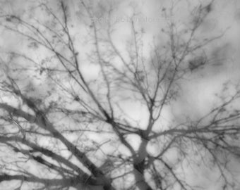 black and white photography, abstract photography, nature, tree photograpy, trees, reflection, fine art photography