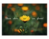 Bloom Where You Are Planted. Inspirational Quote. Art. Photography. Orange Flower. Floral. Green. Home decor.
