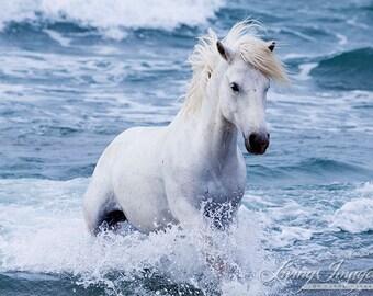 White Stallion in the Waves - Fine Art Horse Photograph - Horse - Ocean - Camargue - Fine Art Print