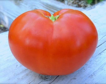 SALE! Beefsteak Heirloom Tomato Organic Seeds Rare