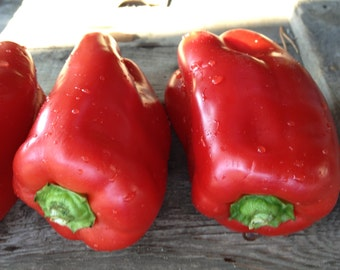 CLEARCLEARANCE SALE! Red Sweet Bell Pepper King of the North Rare HUGE Early Variety for Northern Gardens Heirloom Seed Early Producer