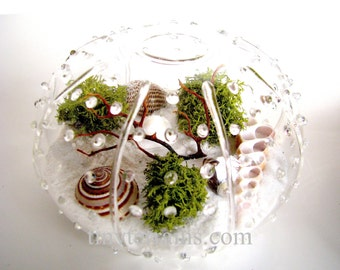 Glass Urchin Beach Lichen Terrarium: White, Natural or Black Sand
