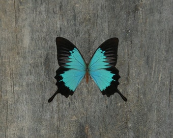 Butterfly Temporary Tattoo - Butterfly Tattoo