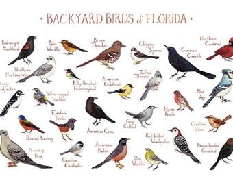 backyard birds of west virginia field guide style by katedolamore
