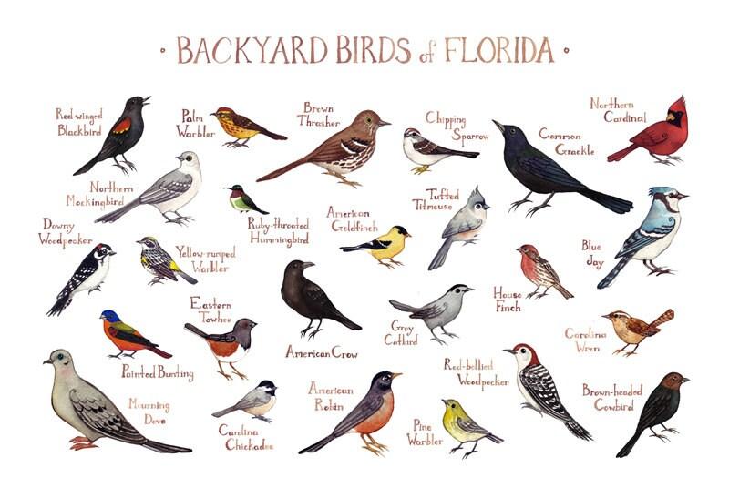 Florida Backyard Birds Field Guide Art Print / Watercolor