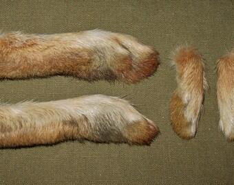 Set of 4 Wild Rabbit Feet