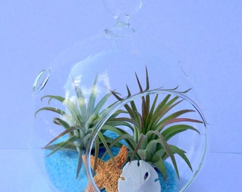 """Air Plant Orb Hanging Terrarium Clear Glass Orb Kit  beach theme 4.5"""" Glass Orb"""