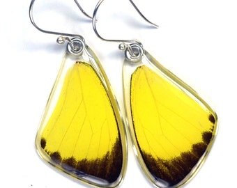 Real Grass Yellow Butterfly (Eurema hecabe brenda) (top/fore wings) earrings