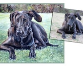 custom dog portrait pet oil painting great dane mutt puppy art great gift 14x18 made to order by Heather Hughes