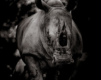 Rhino photography print. Rhinoceros Africa wall art. Nature home decor. Black and white dark moody modern wall prints. New apartment gift
