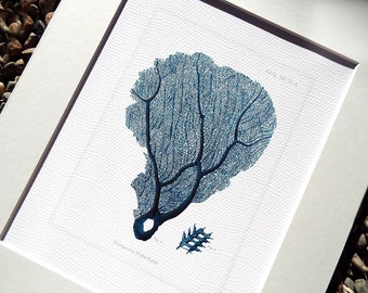 Navy Blue Sea Coral Fan 2 Naturalist Collection Archival Print on Watercolor Paper