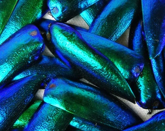 """Multipack 1.25"""" Elytra Beetle Wings BLUE TONE green iridescent elyctra insect bug metallic jewel green and blue taxidermy"""